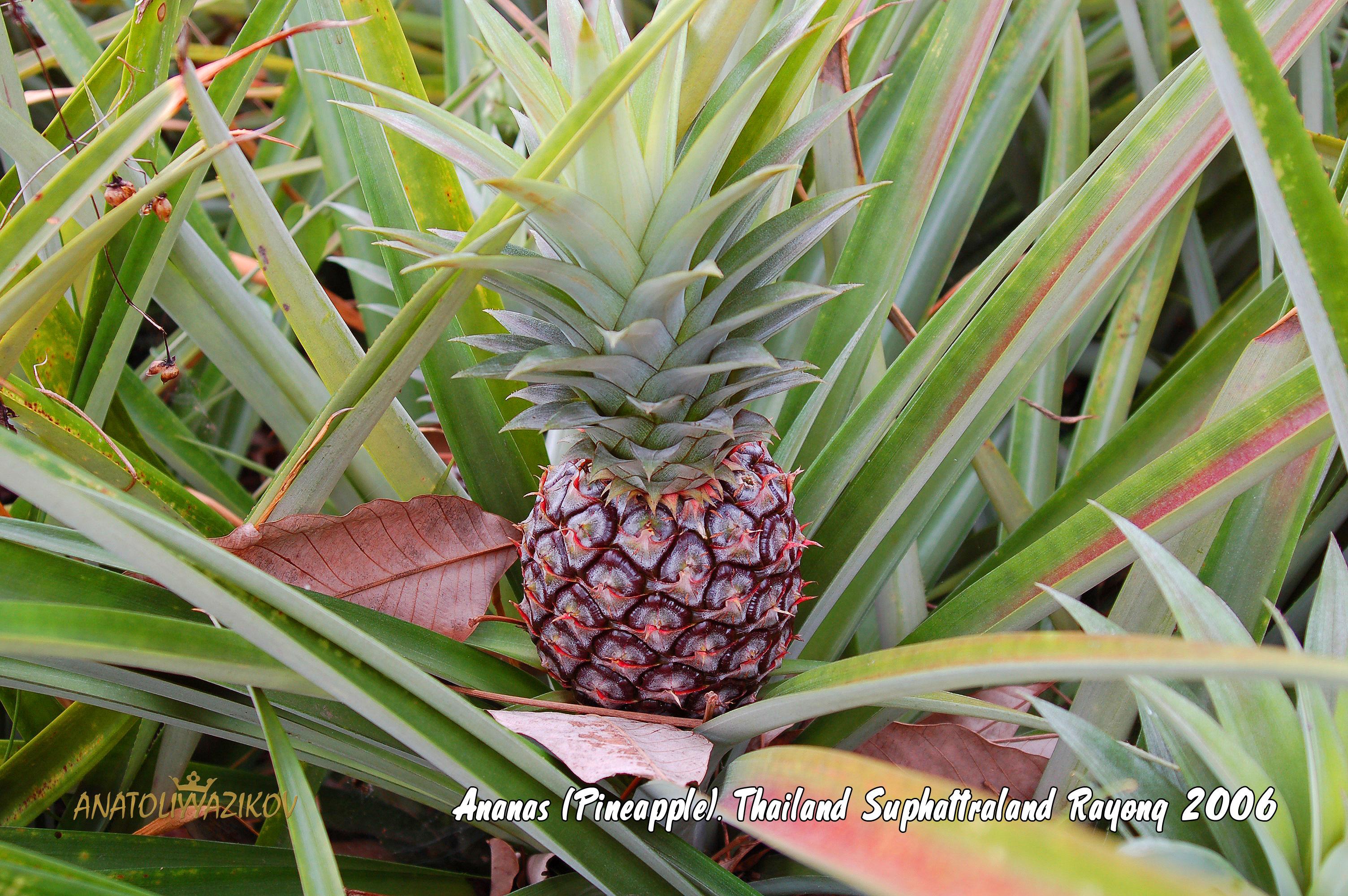 Пэйшнфрут плод страсти рамбутан